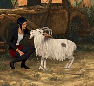 Goat n°1 (BS5)