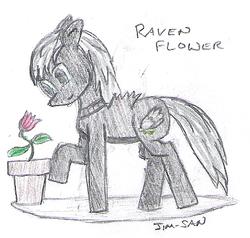 129718772374-Mini-Raven