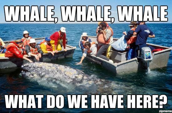 File:Whale whale whale.jpg