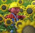 File:Bob walking in the sunflower garden.jpg