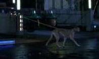 File:Dogwalker.PNG