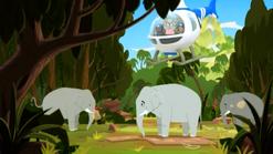 Elephant34