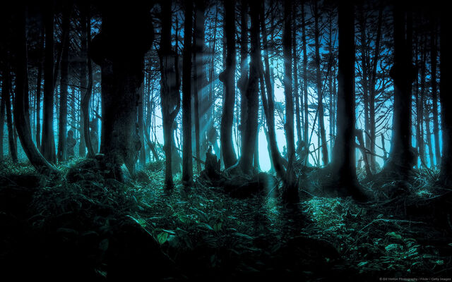 File:Eerie Forest Windows Background.jpg