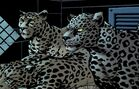 Dez and sisters jaguar