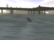 Jimmy swimming