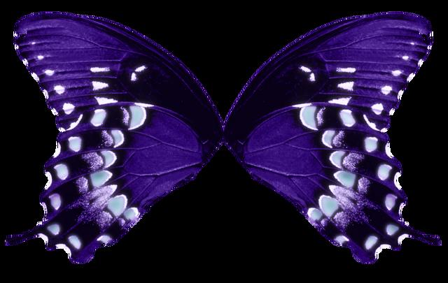File:Butterfly wings purple aqua by fairyfindings-d48e0im.png