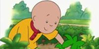 Caillou Goes Strawberry Picking