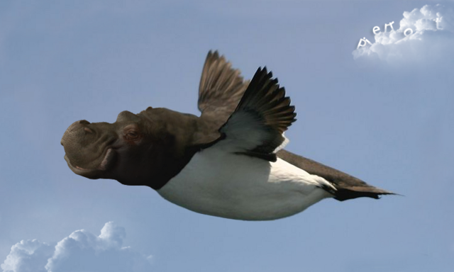 File:Flyppo.png