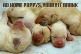 File:Drunken dogs.jpg