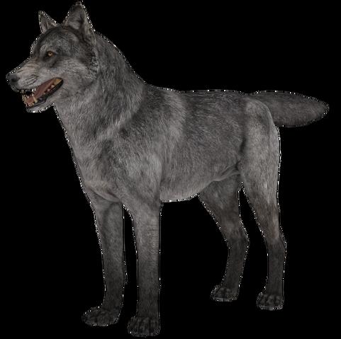 File:Wolf model 1 fur CoDG.png