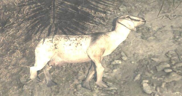 File:Dead Goat Village MW3.jpg