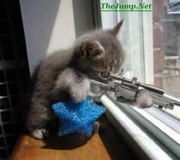 File:Lol sniper cat.jpg