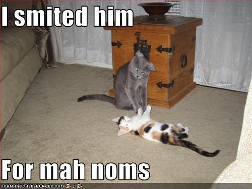 File:Shotrocket6 Cats.jpg