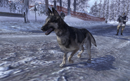 Dog Contingency MW2