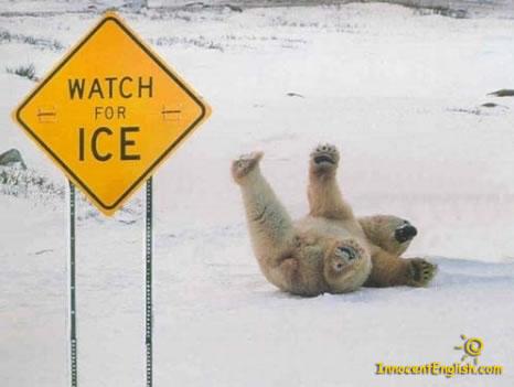 File:Funny-polar-bear-pic-img121.jpg