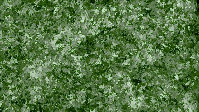 File:Forest Spots.jpg