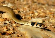 Baby snake2