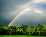 Rainbow s end 4bd0f3282cc5d