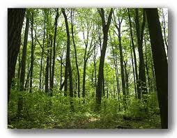 File:Woods.jpeg