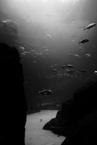 File:The depths by muteddreams-d34k644.jpg