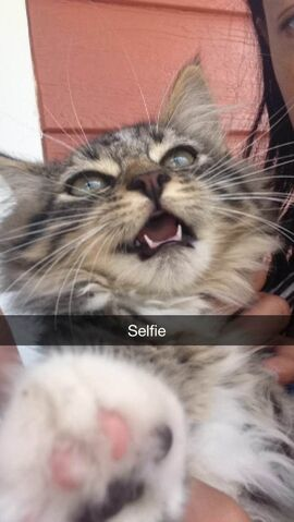 File:Selfie.jpg