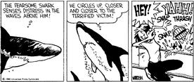 Calvin the Shark