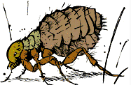 File:Calvin the Flea.png