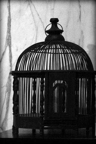 File:Empty Cage.jpg