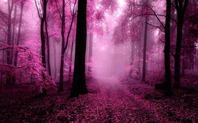File:Foggy-forest-39850.jpg
