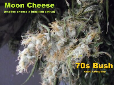 Moon Cheese ice 002