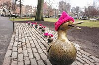Boston ducklings in pink pussyhats