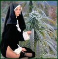 Cannabis nun.jpg