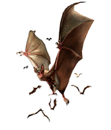 RE0 Infected Bat