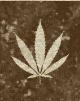 Caravaneer Industry - Cannabis Cultivation