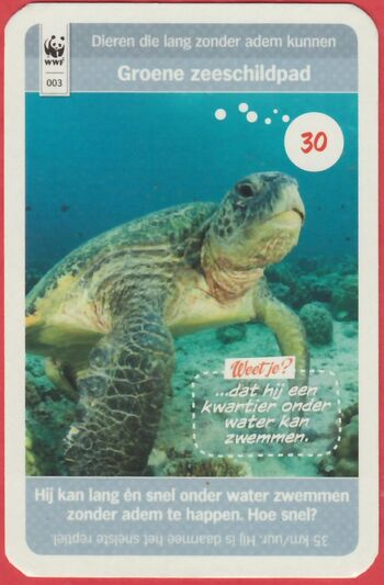 003groenezeeschildpad