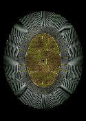 Map-CTDR-Footy
