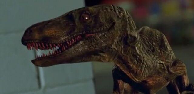 File:Velociraptor 2012 01.jpg