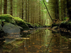 Forest dunant