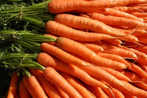 File:Wikia-Visualization-Main,carrot.png