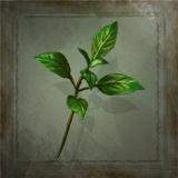 Sylvan Leaf