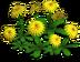 Yellow Goosefoot