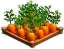File:Carrots 02.png