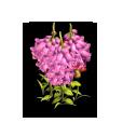 FlowerBellflower 01 Icon