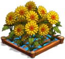 SunflowersIrrigated 02