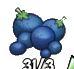 Berry