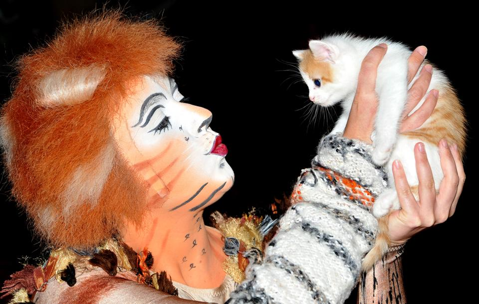 File:Jennyanydots Alice Redmond kitten.jpg