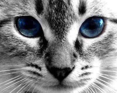 File:Cat face.jpg