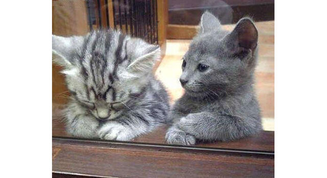 File:Forum cats.jpg