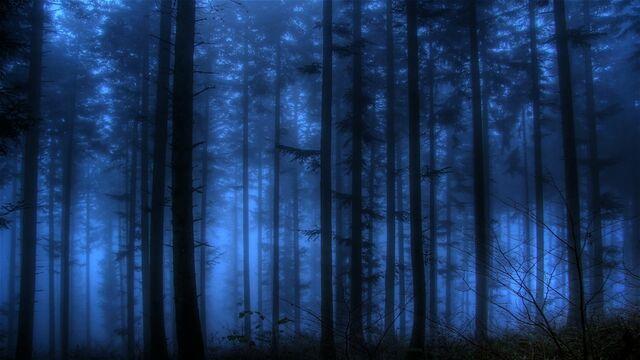 File:Blue landscapes nature forest 2560x1440 wallpaper www.wallpaperto.com 46.jpg
