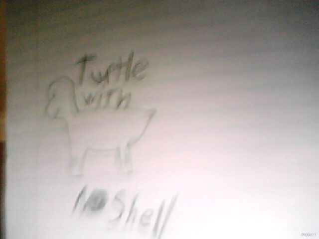 File:Turtle no shell.jpg